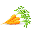 Nutritious carrots vector image vector image