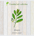 jamaica pepper essential oil label aromatic vector image vector image