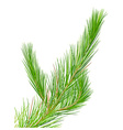 Pine vector image vector image