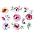 watercolor hand drawn floral set vector image