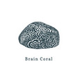 brain coral drawing of sea vector image vector image