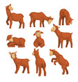 cute lamb character set funny farm animals with vector image