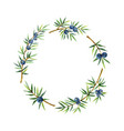 watercolor wreath plants juniper isolated on white vector image