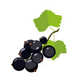 black currant icon in cartoon style vector image