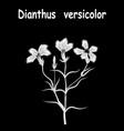 dianthus flower drawing tattoo vintage line vector image vector image