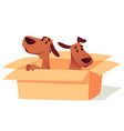 dogs in cardboard box waiting for owner adoption vector image