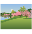 Lake with cherry blossoms vector image vector image