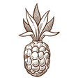 pineapple tropical fruit isolated sketch food vector image