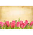 Valentines day background Beautiful tulip flowers vector image