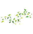 green leaf background vector image