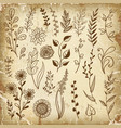 hand drawn plant herb flowers vector image vector image