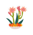 spring amaryllis flowers in flowerpot beautiful vector image vector image