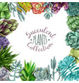 succulent plants collection vector image vector image