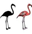 flamingo bird silhouette and sketch vector image