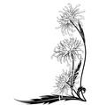 flower of chrysanthemum vector image vector image