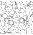 macadamia branches pattern vector image vector image