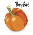 orange pumpkin isolated on white background vector image