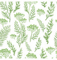 seamless pattern with herbs plants and flowers vector image vector image