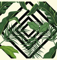 tropical leave palm tree design vector image