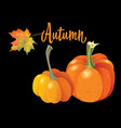 two orange pumpkin isolated on black background vector image