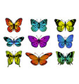 collection colorful butterflies vector image