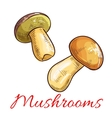 Mushrooms sketch vegetarian food vector image vector image