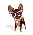sweet little dog in pink clothes vector image vector image