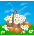 Basket with daisies and eggs on the grass vector image
