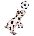 piglet plays football vector image