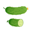 cucumber and half cucumber vector image vector image