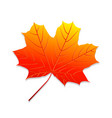 realistic autumn leaf maple leaf vector image vector image