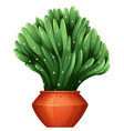 beautiful shape of cactus in claypot vector image vector image