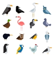 Birds set Egle parrot vector image