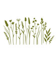 set wild flowers plants and herbs silhouettes vector image vector image