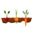 vegetables growing in ground one line onion vector image vector image