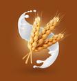 wheat and milk splash barley cereals in yogurt vector image vector image