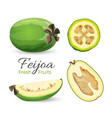 feijoa fresh fruits whole and cut vector image vector image