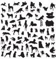 set of different breeds of dogs on a white backgro vector image vector image