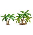 Coconut trees vector image vector image
