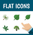 icon flat ecology set of oak foliage spruce vector image vector image