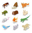 isometric domestic animals pets vector image vector image