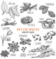 set of spices in sketch style vector image vector image