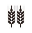 wheat ear icon vector image vector image