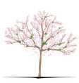 sakura tree vector image