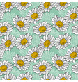 blossoming white daisies on a light green vector image vector image