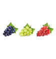 different wine grapes green black red grape vector image