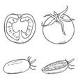 set sketch tomato vector image vector image