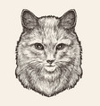 portrait of cute furry cat or kitty sketch drawn vector image vector image