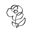 rose flower concept continuous line hand drawing vector image