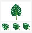 set monstera leaf tropical plant leaf simple vector image vector image